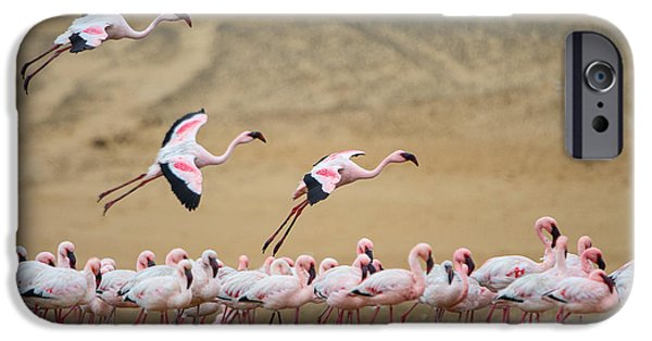 Greater Flamingos Phoenicopterus IPhone 6s Case