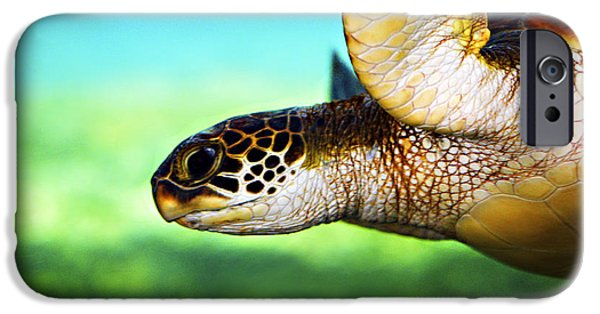 Reptiles iPhone 6s Case - Green Sea Turtle by Marilyn Hunt
