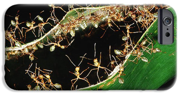 Green Tree Ants IPhone 6s Case by B. G. Thomson