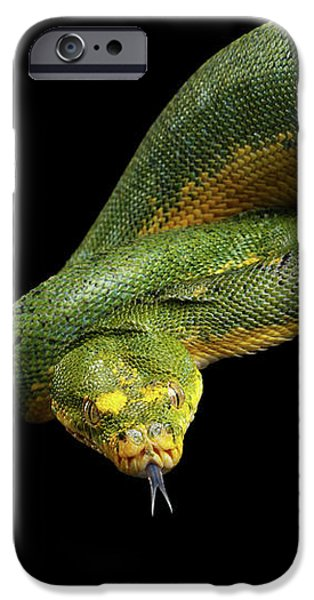 Green Tree Python. Morelia Viridis. Isolated Black Background IPhone 6s Case by Sergey Taran
