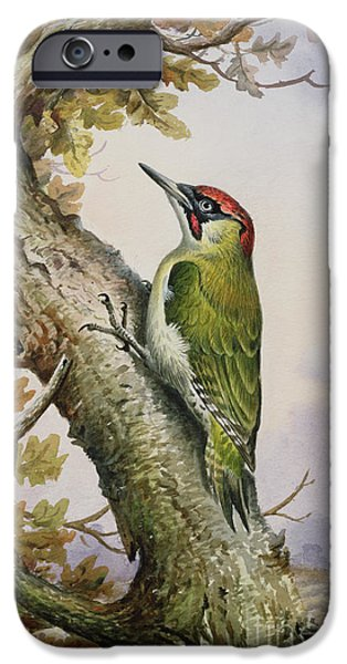 Green Woodpecker IPhone 6s Case by Carl Donner