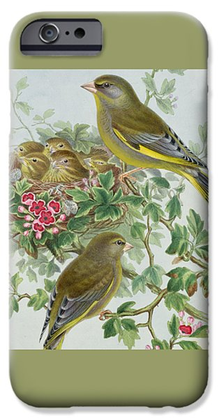 Greenfinch IPhone 6s Case by John Gould