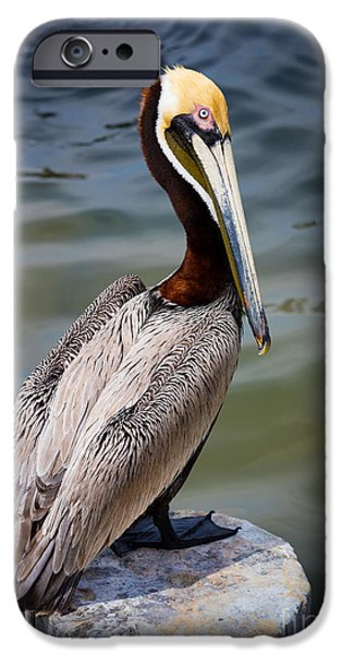 Grey Pelican IPhone 6s Case by Inge Johnsson