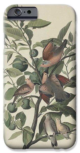 Ground Dove IPhone 6s Case by Rob Dreyer