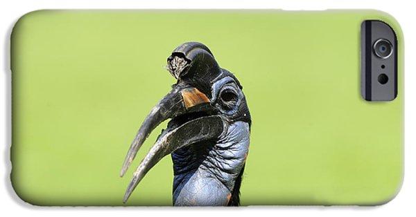 Ground Hornbill IPhone 6s Case by David & Micha Sheldon