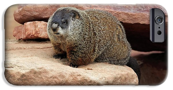 Groundhog IPhone 6s Case by Louise Heusinkveld