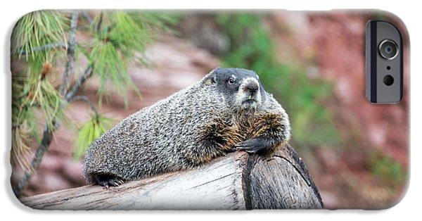 Groundhog On A Log IPhone 6s Case by Jess Kraft
