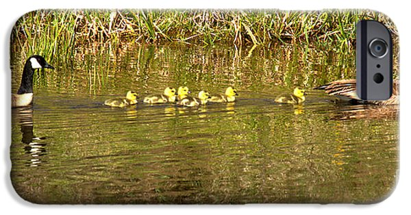 Gosling iPhone 6s Case - Guiding The Goslings by Adam Jewell
