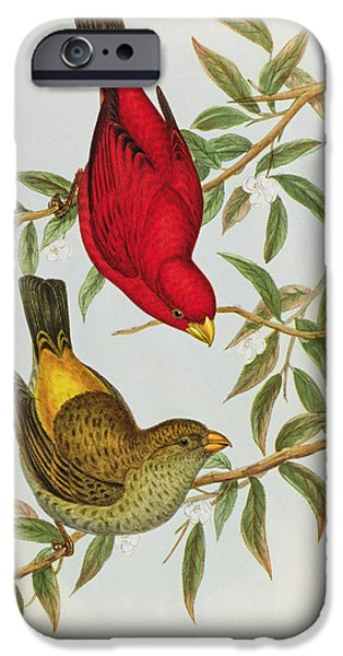 Scarlet iPhone 6s Case - Haematospiza Sipahi by John Gould