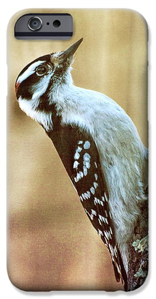 Hairy Woodpecker IPhone 6s Case