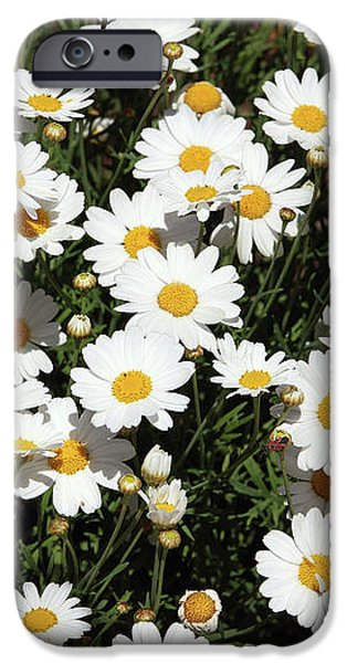 Daisy iPhone 6s Case - Happy Daisies- Photography By Linda Woods by Linda Woods