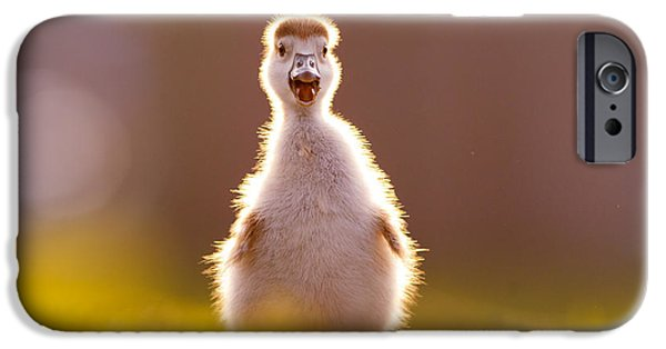Gosling iPhone 6s Case - Happy Easter - Cute Baby Gosling by Roeselien Raimond