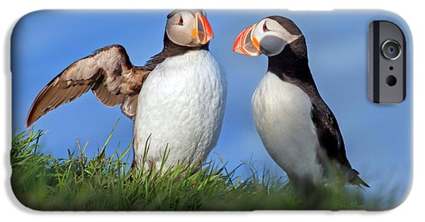 Puffin iPhone 6s Case - He Went That Way by Betsy Knapp