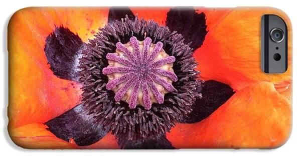 iPhone 6s Case - Heart Of A Poppy by Orphelia Aristal