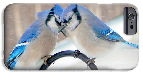 Bluejay iPhone 6s Case - Heart To Heart by Karen Cook