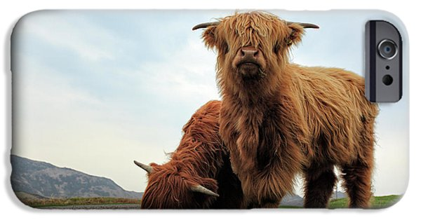 Cow iPhone 6s Case - Highland Cow Calves by Grant Glendinning
