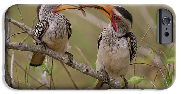 Hornbill Love IPhone 6s Case by Bruce J Robinson