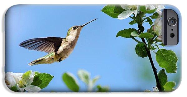 Hummingbird Springtime IPhone 6s Case