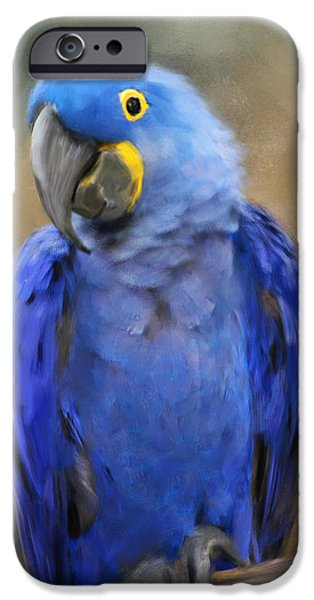 Hyacinth Macaw  IPhone 6s Case