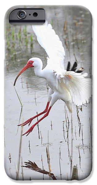 Ibis Soft Water Landing IPhone 6s Case by Carol Groenen