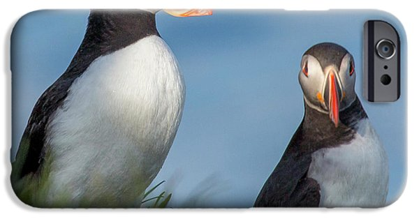 Puffin iPhone 6s Case - Iceland Puffins  by Betsy Knapp