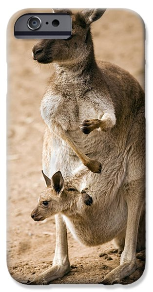 Kangaroo iPhone 6s Case - In  Mother's Care by Mike  Dawson