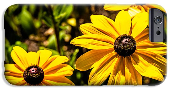 Indian Summer Gloriosa Daisy IPhone 6s Case