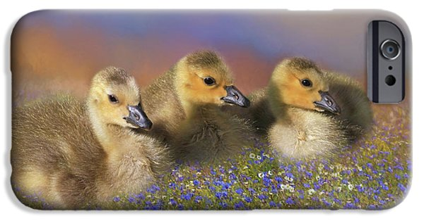 Gosling iPhone 6s Case - Innocence by Donna Kennedy