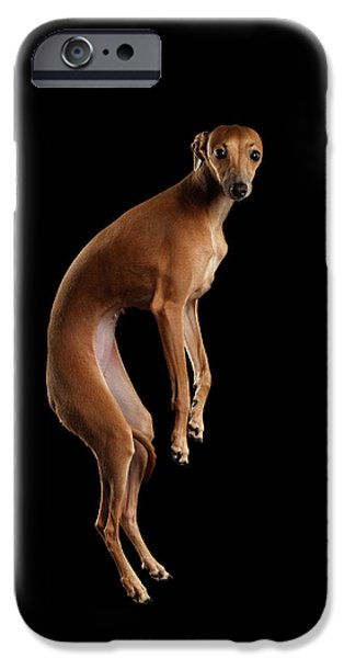 Italian Greyhound Dog Jumping, Hangs In Air, Looking Camera Isolated IPhone 6s Case by Sergey Taran