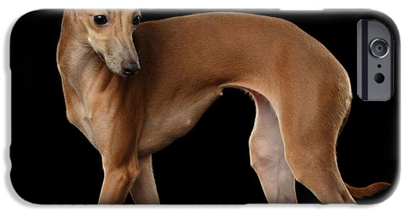 Italian Greyhound Dog Standing  Isolated IPhone 6s Case by Sergey Taran
