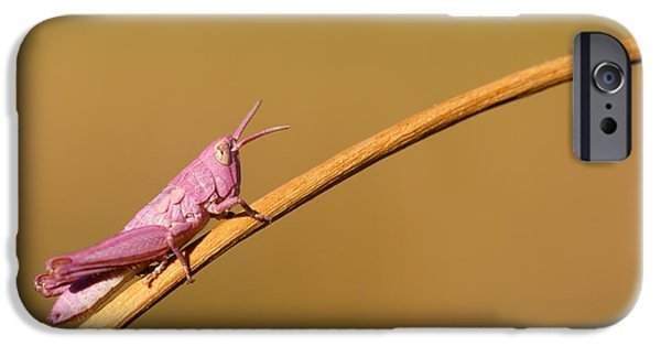 Grasshopper iPhone 6s Case - It's Not Easy Being Pink by Roeselien Raimond