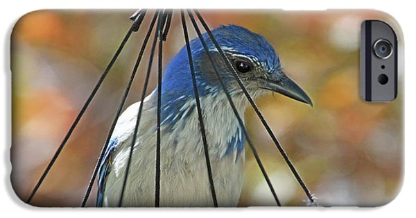 Bluejay iPhone 6s Case - Jail Bird by Donna Kennedy