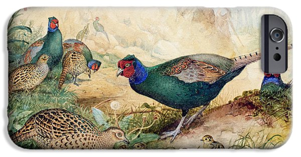 Japanese Pheasants IPhone 6s Case by Joseph Wolf