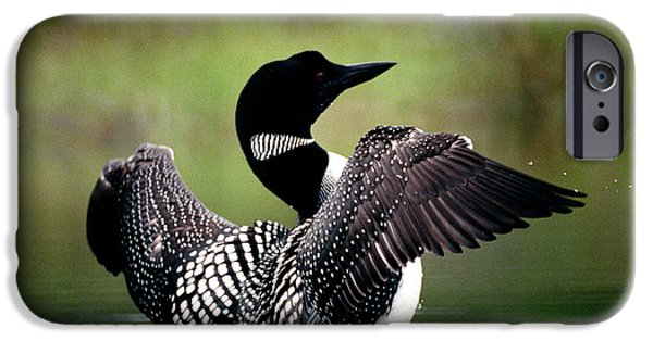 Loon iPhone 6s Case - Jasper - Loon 2 by Terry Elniski