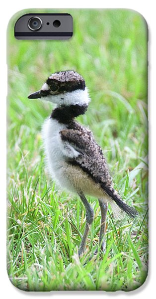 Killdeer Chick 3825 IPhone 6s Case