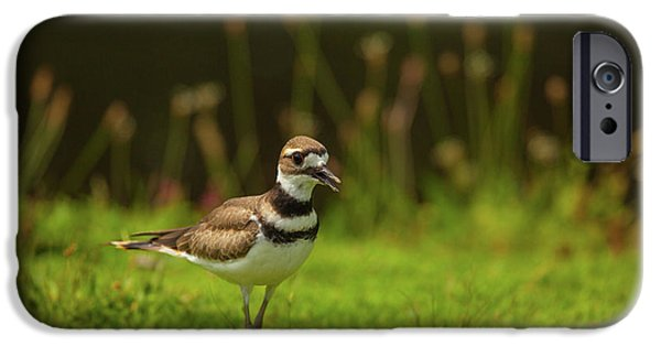 Killdeer IPhone 6s Case by Karol Livote