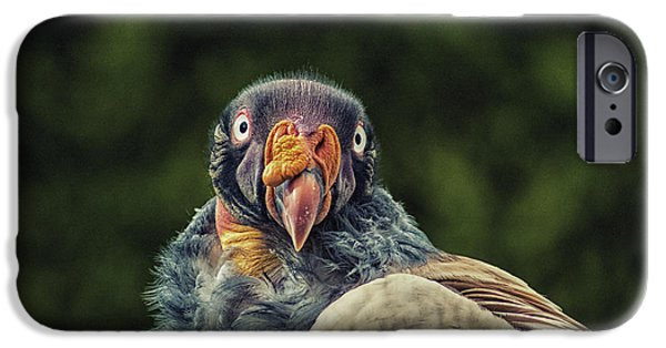 King Vulture IPhone 6s Case by Martin Newman