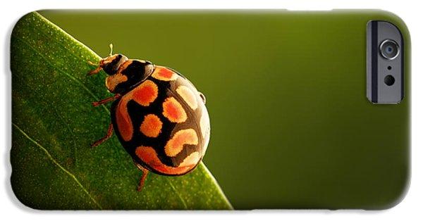 Animals iPhone 6s Case - Ladybug  On Green Leaf by Johan Swanepoel