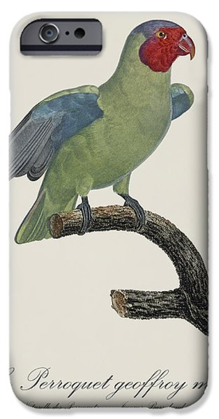 Le Perroquet Geoffroy Male / Red Cheeked Parrot - Restored 19th C. By Barraband IPhone 6s Case