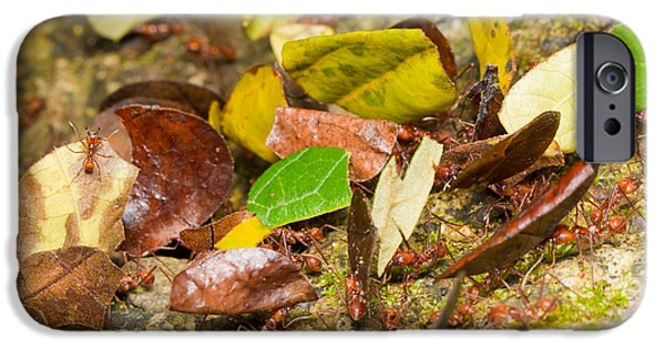 Leaf-cutter Ants IPhone 6s Case by B.G. Thomson
