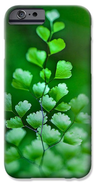 New Leaf iPhone 6s Case - Leaves Rising by Az Jackson