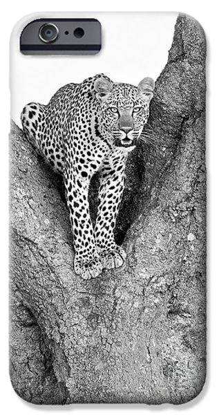 Leopard In A Tree IPhone 6s Case