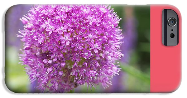 Lilac-pink Allium IPhone 6s Case by Rona Black