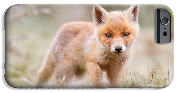 Little Fox Kit, Big World IPhone 6s Case