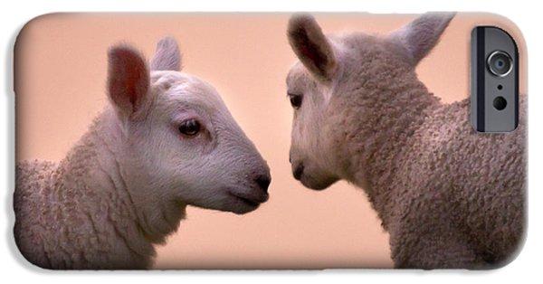 Sheep iPhone 6s Case - Little Gossips by Angel Ciesniarska