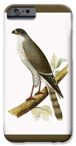 Little Red Billed Hawk IPhone 6s Case by English School