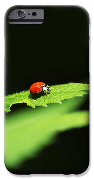 Little Red Ladybug On Green Leaf IPhone 6s Case