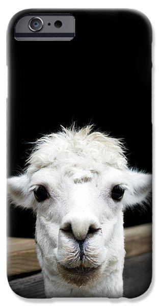 Llama IPhone 6s Case by Lauren Mancke