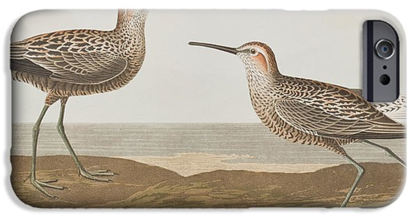 Long-legged Sandpiper IPhone 6s Case by John James Audubon