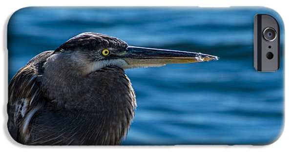 Looking For Lunch IPhone 6s Case by Marvin Spates